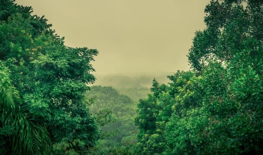 Дождевые леса Бразилии