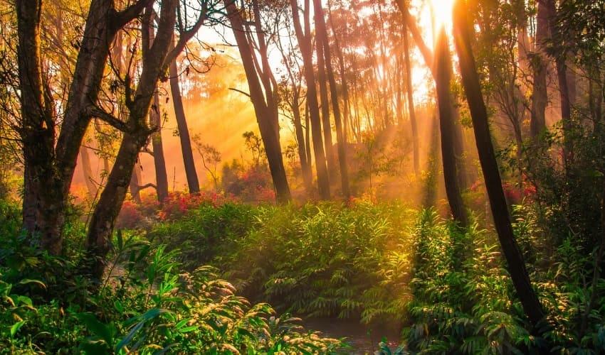 Дождевой лес Мадагаскара