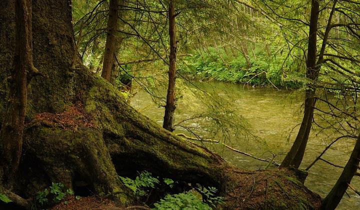 почему дождевые леса так важны для здоровья нашей планеты, почему дождевые леса важны для здоровья планеты, дождевые леса, почему важны дождевые леса, зачем нужны дождевые леса