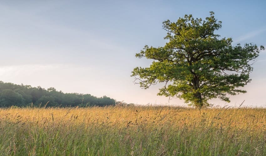 Кто обитает в дубовых ветвях?