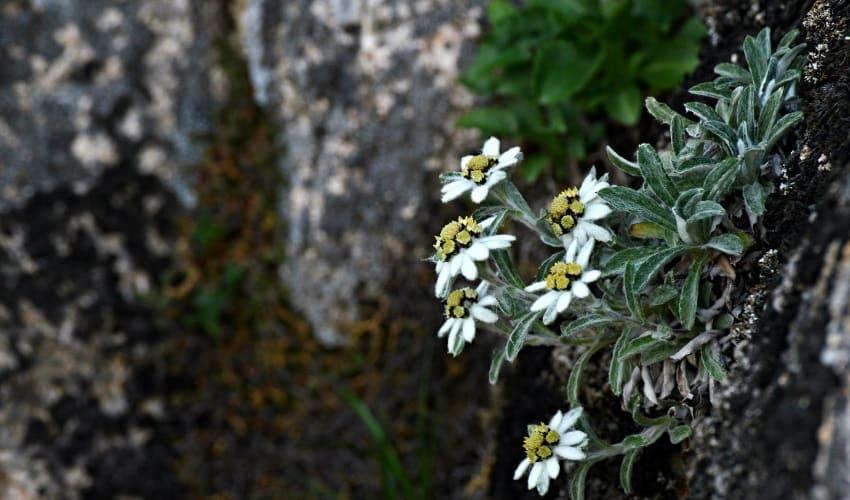 Может ли растение обитать в снегу и льдах?