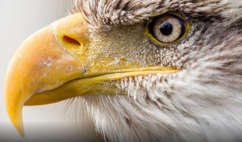 может ли орел увидеть мышь на расстоянии 3 км