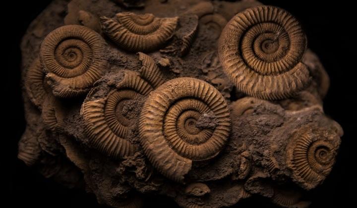 что такое ископаемые, ископаемые, ископаемые это, возраст ископаемых