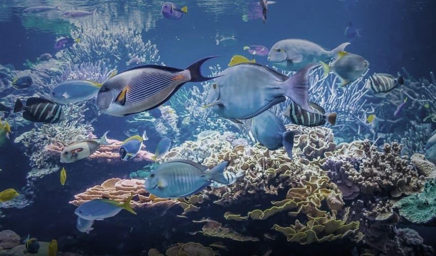 как рыбы дышат под водой, как дышат рыбы под водой, жабры