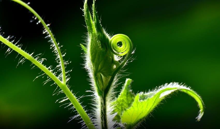 как питаются растения, питание растений, чем питаются растения, питаются растения, как происходит питание растений