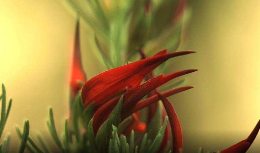 Как растения растут?