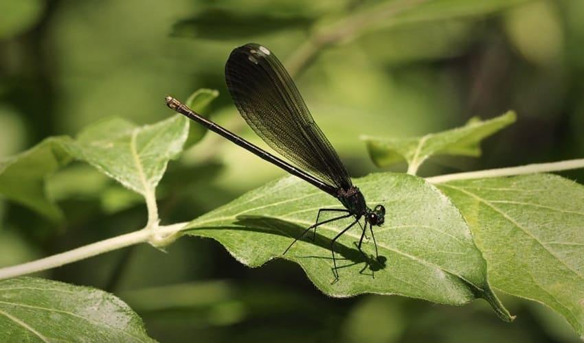 как растут насекомые, как растут личинки насекомых, стадии роста насекомых