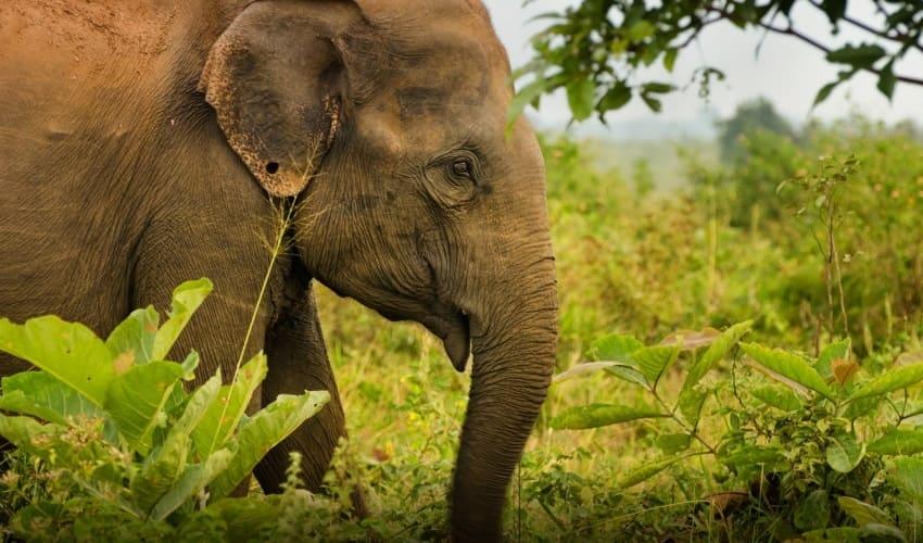 как связаны между собой животные и растения, связь животных и растений, зависимость животных от растений, связь между животными и растениями