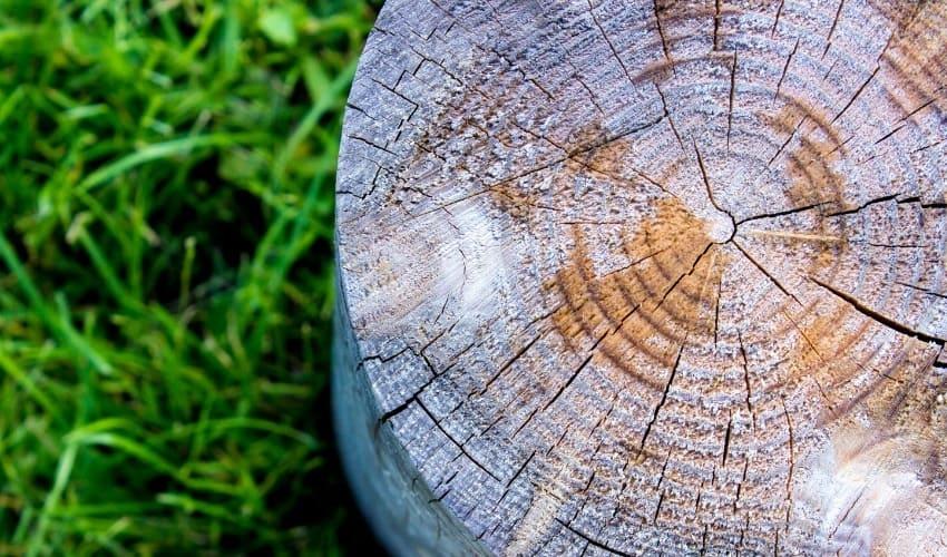как узнать возраст дерева, возраст дерева