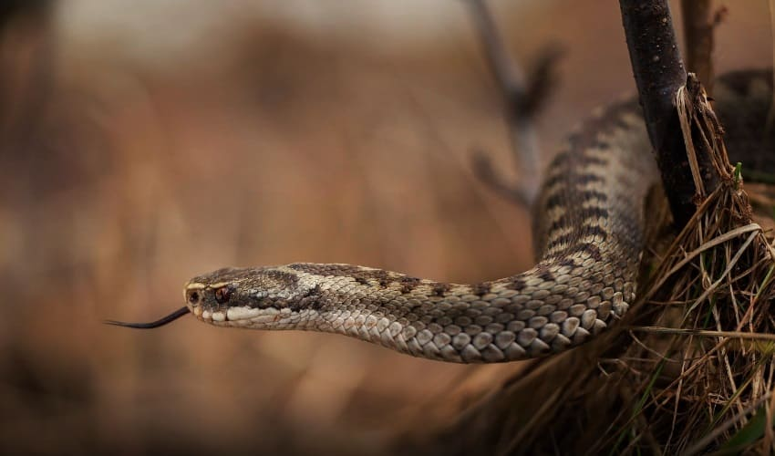 как ящерицы и змеи чувствуют запахи, как ящерицы чувствуют запахи, как змеи чувствуют запахи