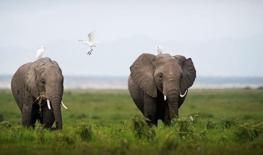 какое африканское животное может съесть в день полтонны корма, какое животное может съесть в день полтонны корма, какое животное съедает в день полтонны корма