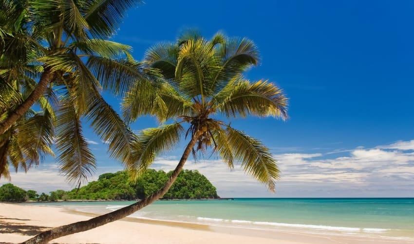 на каком дереве растут самые большие орехи, самые большие орехи, кокосовые орехи, кокосовое дерево, коко де мар
