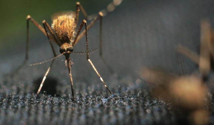 что значит короче комариного носа, что значит толщиной с волосок, короче комариного носа, толщиной с волосок