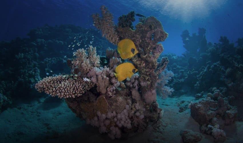 коралл это животное или растение, что такое коралл, коралл это, коралл животное, коралл растение, что собой представляет коралл