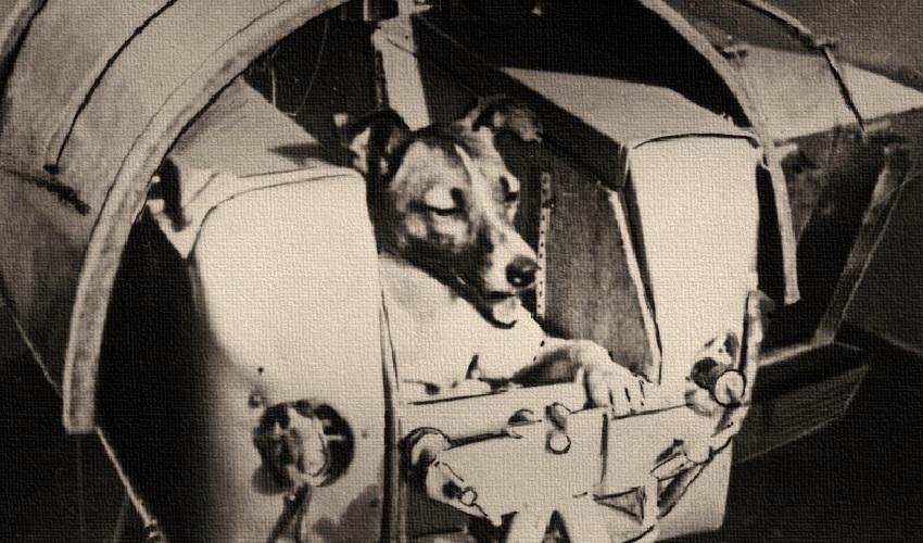 Когда в космосе побывали животные?