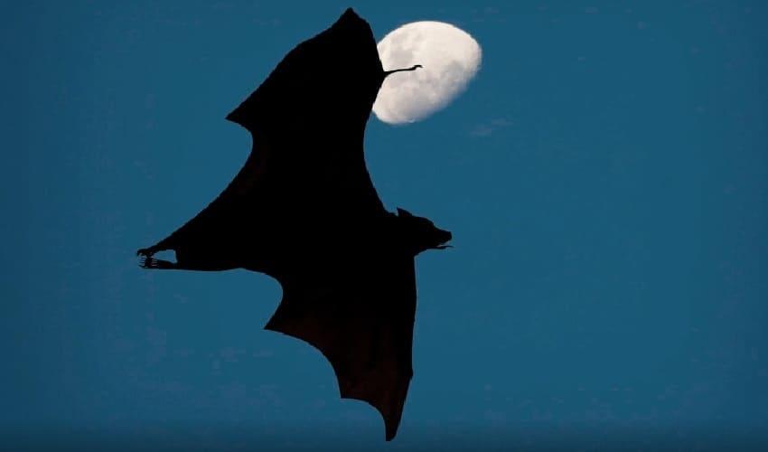 каким образом летучие мыши видят в темноте, как летучие мыши видят в темноте, летучие мыши