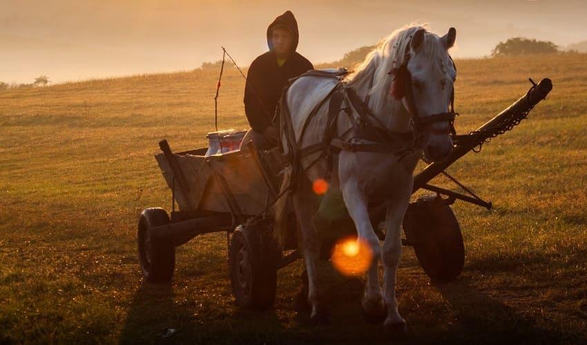 что такое лошадиная сила, лошадиная сила, лошадиная сила это
