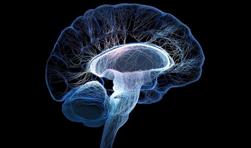 Что делает мой головной мозг, помимо мышления?