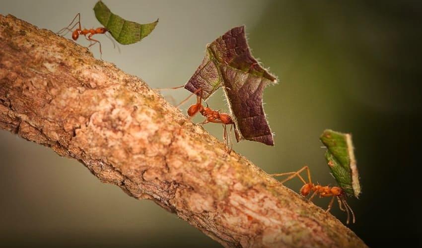 правда ли что у насекомых бывают рабы, муравьи рабы, муравьи, бывают ли у насекомых рабы, рабы насекомых