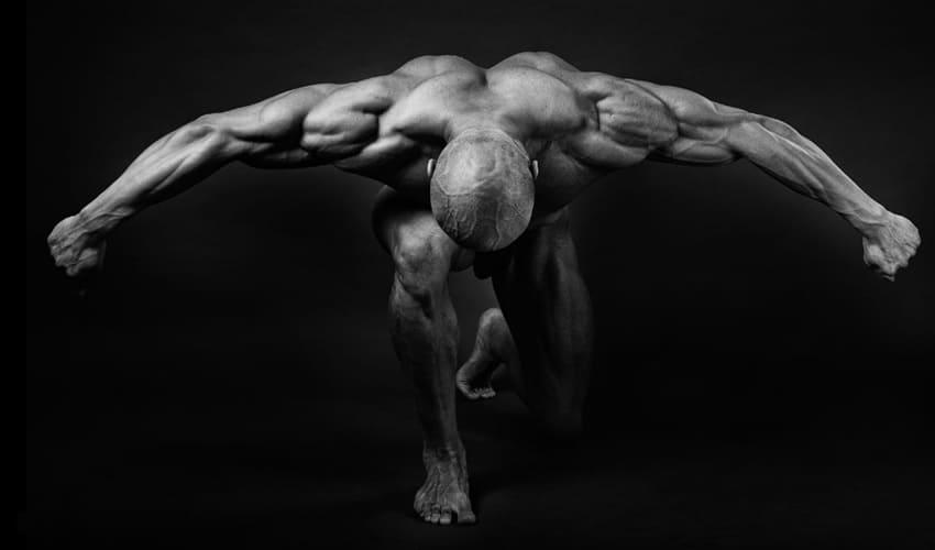 из чего сделаны мышцы, мышцы, мышцы представляют собой, мышцы работают, мышцы образуют, мышца, мышца состоит, мышечная ткань