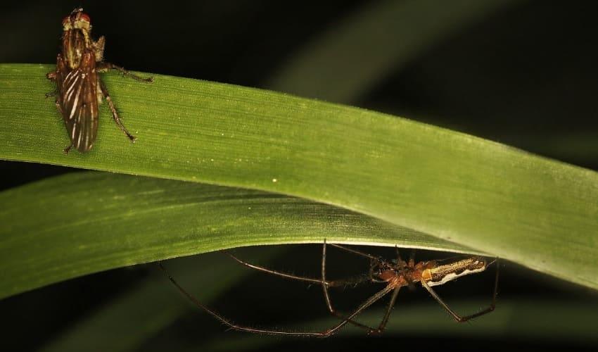В чем разница между насекомым и пауком?