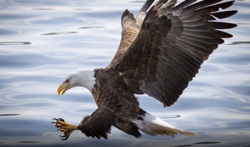 как птицы меняют перья, перья, перья птиц, птицы меняют перья