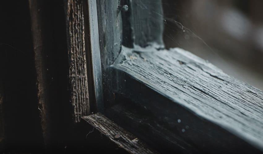 сколько пауков живет в моем доме, пауки в доме, где прячутся пауки