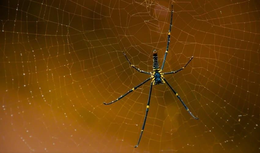 Как долго паук плетет свою паутину?