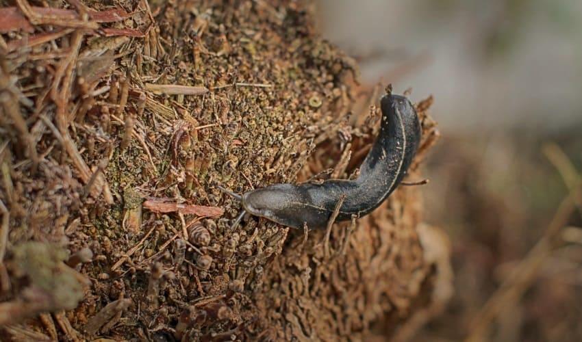 используют ли насекомых и червей в медицине, используют ли червей в медицине, используют ли насекомых в медицине, использование червей и насекомых в медицине, использование пиявок в медицине