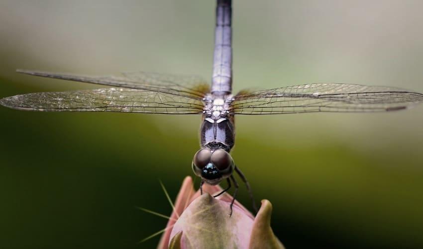 почему насекомых так много, почему на земле много насекомых, почему насекомых много