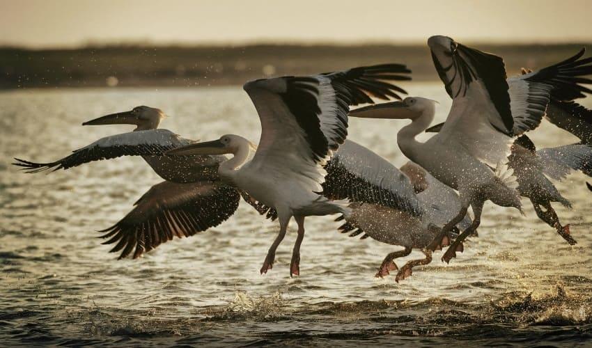 почему птицы на зиму улетают на юг, птицы улетают на юг, перелет птиц на юг, перелет птиц