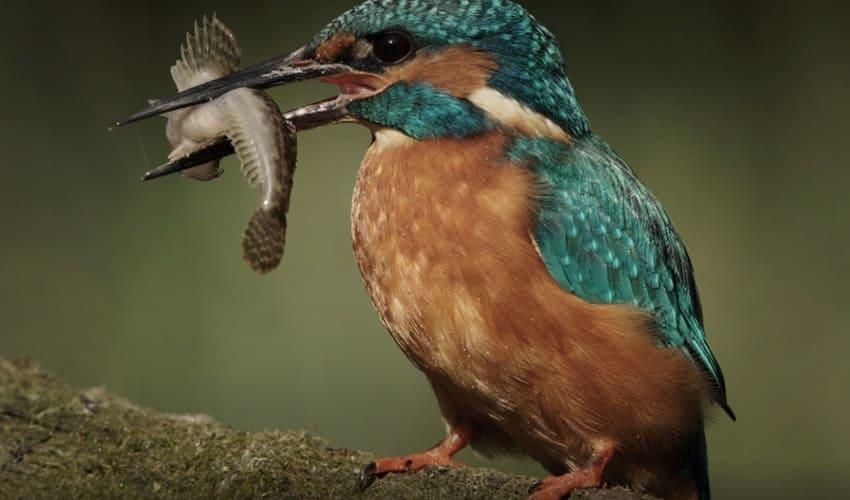 Чем птицы питаются?