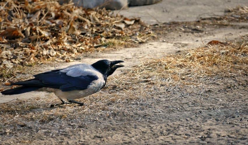 зачем птицам клювы, птичьи клювы, птичий клюв, клюв это, клюв, клюв птицы
