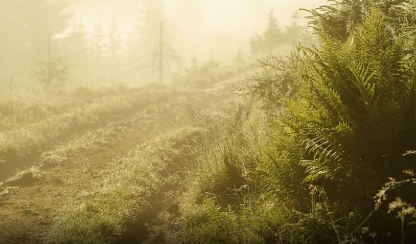существуют ли растения которые растут не из семян, растения не из семян, растения которые размножаются не семенами