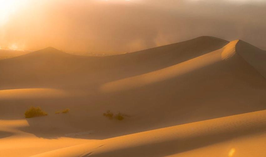 какие растения и животные обитают в пустынях, растения пустынь, животные пустынь