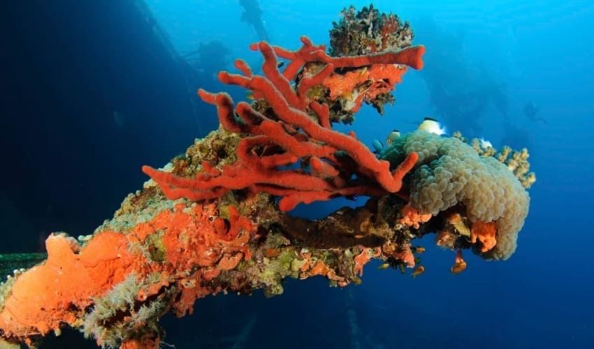 Что такое коралловые рифы?
