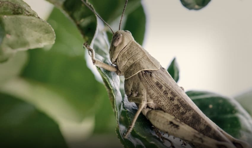 какое насекомое самое большое в мире, самое большое насекомое в мире, самое большое насекомое, самое длинное насекомое, самое тяжелое насекомое