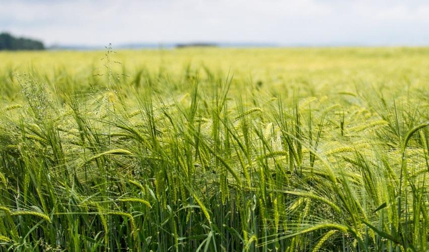 сельское хозяйство в борьбе с загрязнением окружающей среды, чистое сельское хозяйство, сельское хозяйство и загрязнение окружающей среды