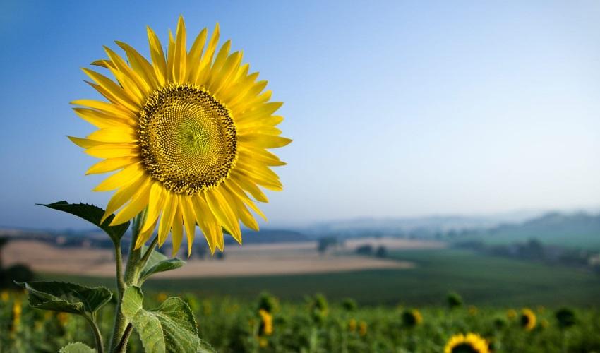 как появляются семена у цветковых растений, семена цветковых растений, появление семян у цветковых растений