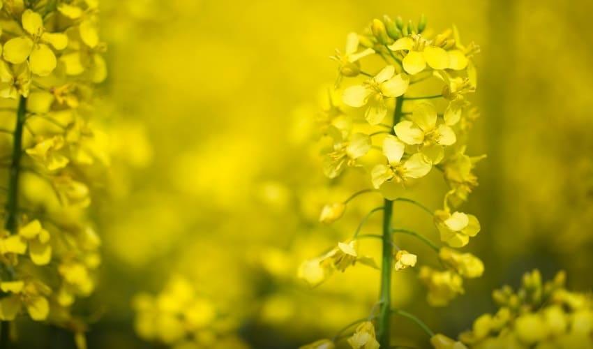 Как семена становятся растениями?