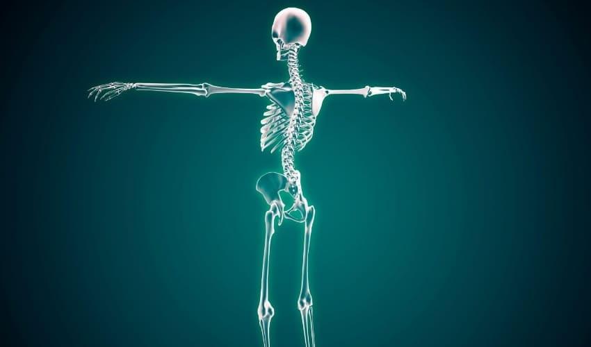 сколько костей в человеческом теле, количество костей у человека, сколько костей у человека, виды костей