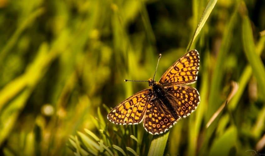 сколько существует видов насекомых, сколько видов насекомых, сколько видов насекомых на земле