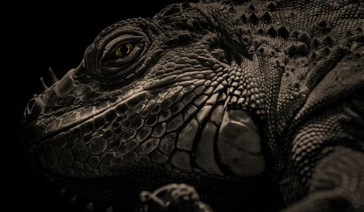 были ли динозавры теплокровными, теплокровные динозавры