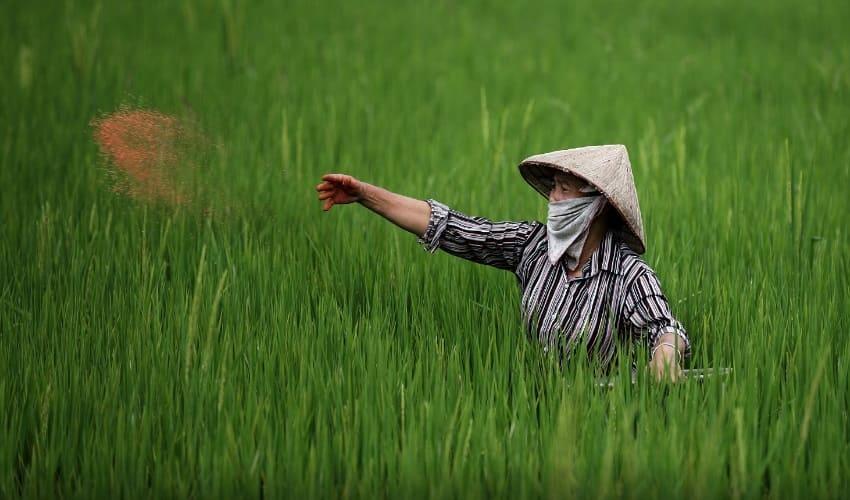 Из чего состоят удобрения для подкормки растений?