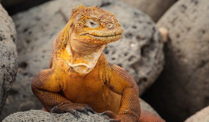 возродятся ли когда-нибудь динозавры, возродятся ли динозавры, возродятся динозавры