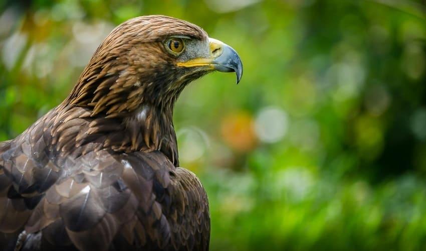 какие птицы являются хищниками, хищные птицы, каких птиц считают хищными, птицы хищники