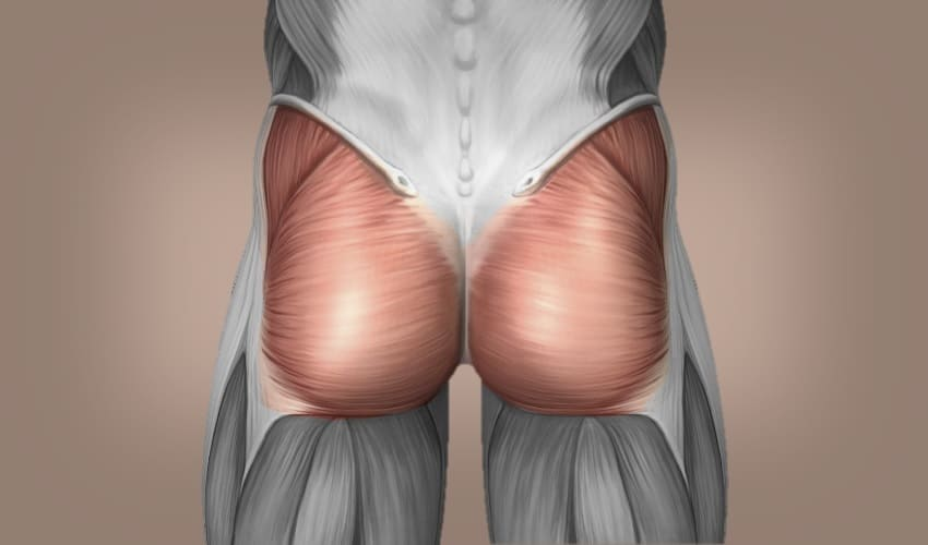 какие мышцы самые большие а какие самые маленькие, какие мышцы самые большие, какие мышцы самые маленькие, какие мышцы самые длинные, самые большие мышцы, самые маленькие мышцы