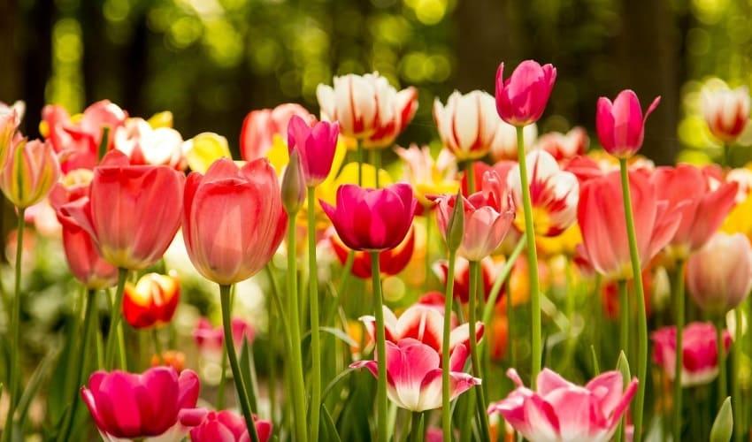 почему многие цветы ярко окрашены, почему цветы ярко окрашены, зачем цветам яркая окраска, окраска цветов