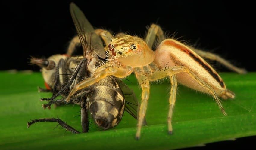 что делают пауки со своими жертвами, как едят пауки, жертвы пауков