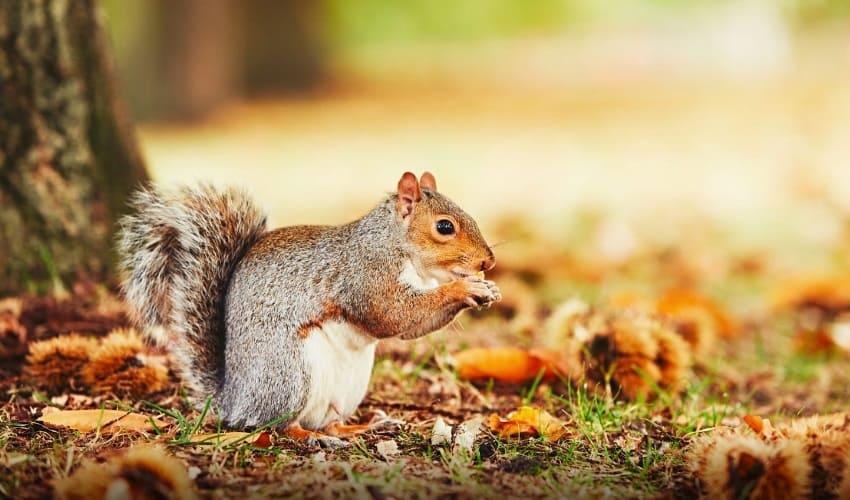 могут ли животные переносить семена, как животные переносят семена, переноска семян животными